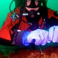 large_diver