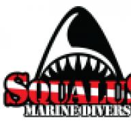 squalus357