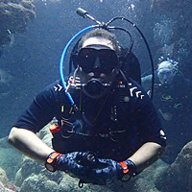 Manatee Diver