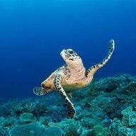 Aqua Turtle