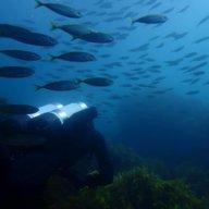 DivingColeridge