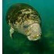 Old Diver