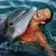 miamidolphin